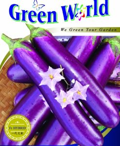 Green World F1 Terung Purple Dream